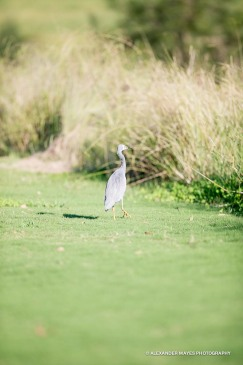 Brickworks Golfday 2014-8023