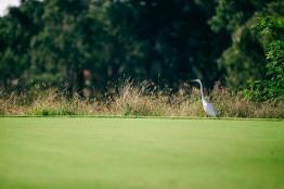 2015 Brickworks Golfday-4788