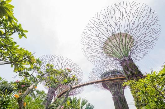 Singapore-3485