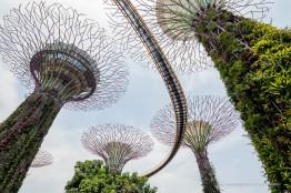 Singapore-3491