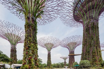 Singapore-3502